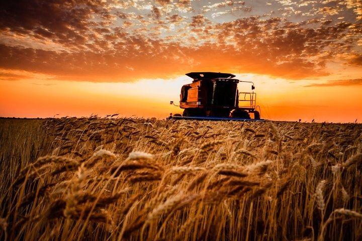 Cedar bluff kansas state park weddings wheat harvest