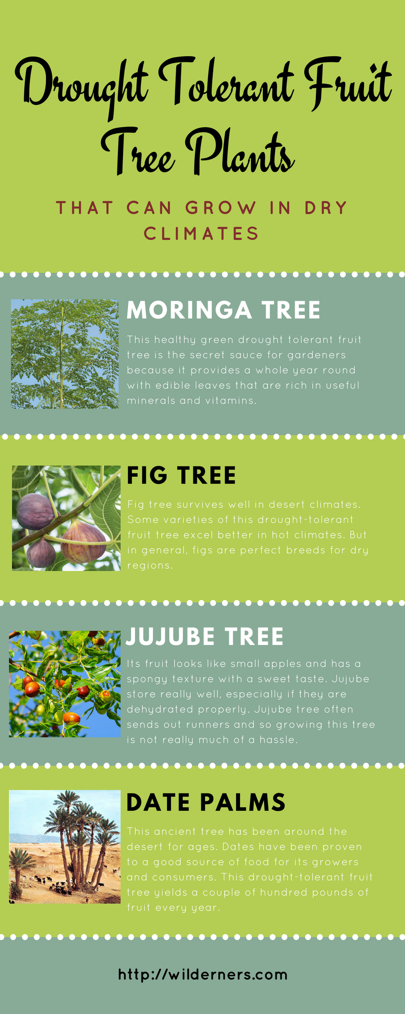 Drought Tolerant Fruit Tree Plants That Can Grow In Dry Climates Dry Climates Drought Tolerant Fruit Trees