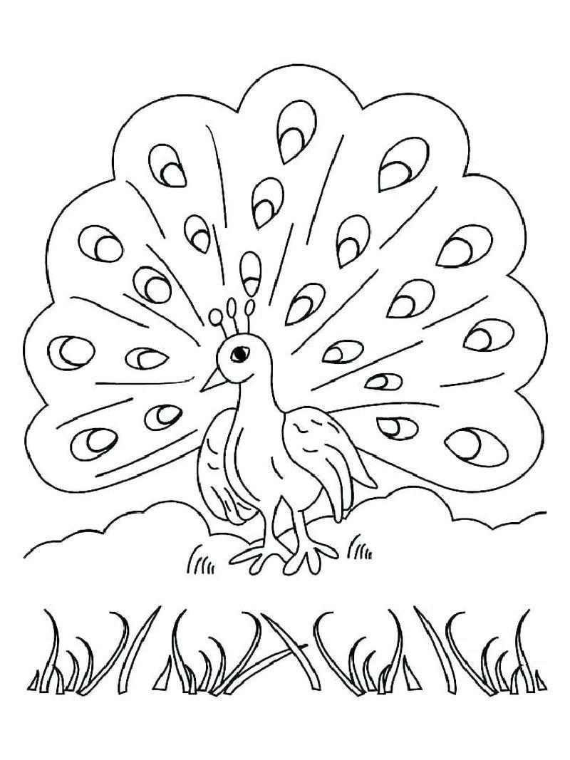 Tavuskuşu Boyama Sayfaları Boyama Peacock Drawing Drawings Ve