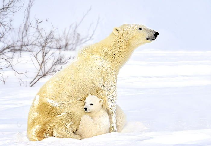 Mother Love by Michelle Valberg - Photo 53652484 - 500px
