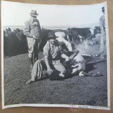 YERRA DE GANADO - MARQUAGE DES ANIMAUX - MARKING OF ANIMALS