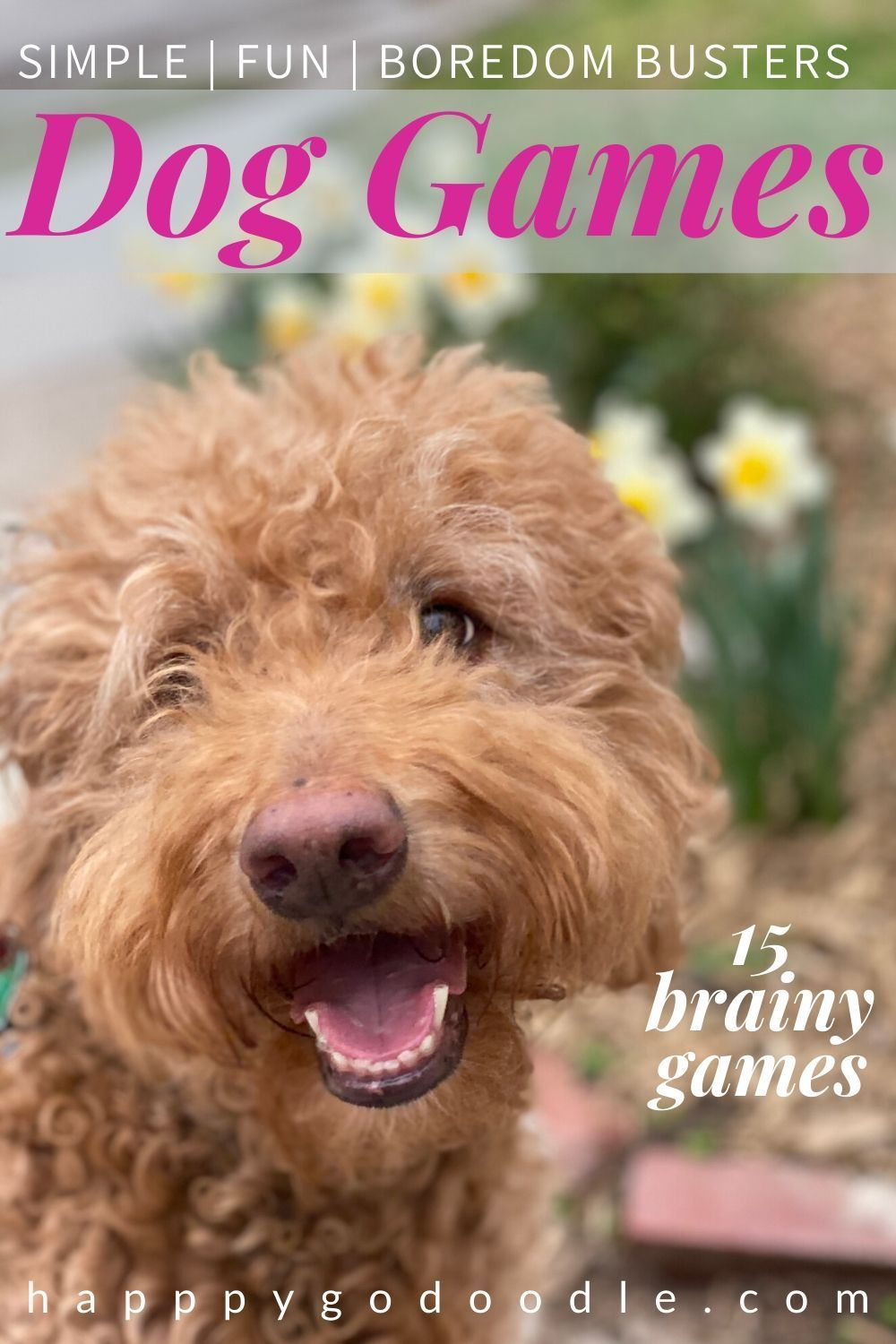 14 Games to Play With Your Dog Game Time Fun & Happiness