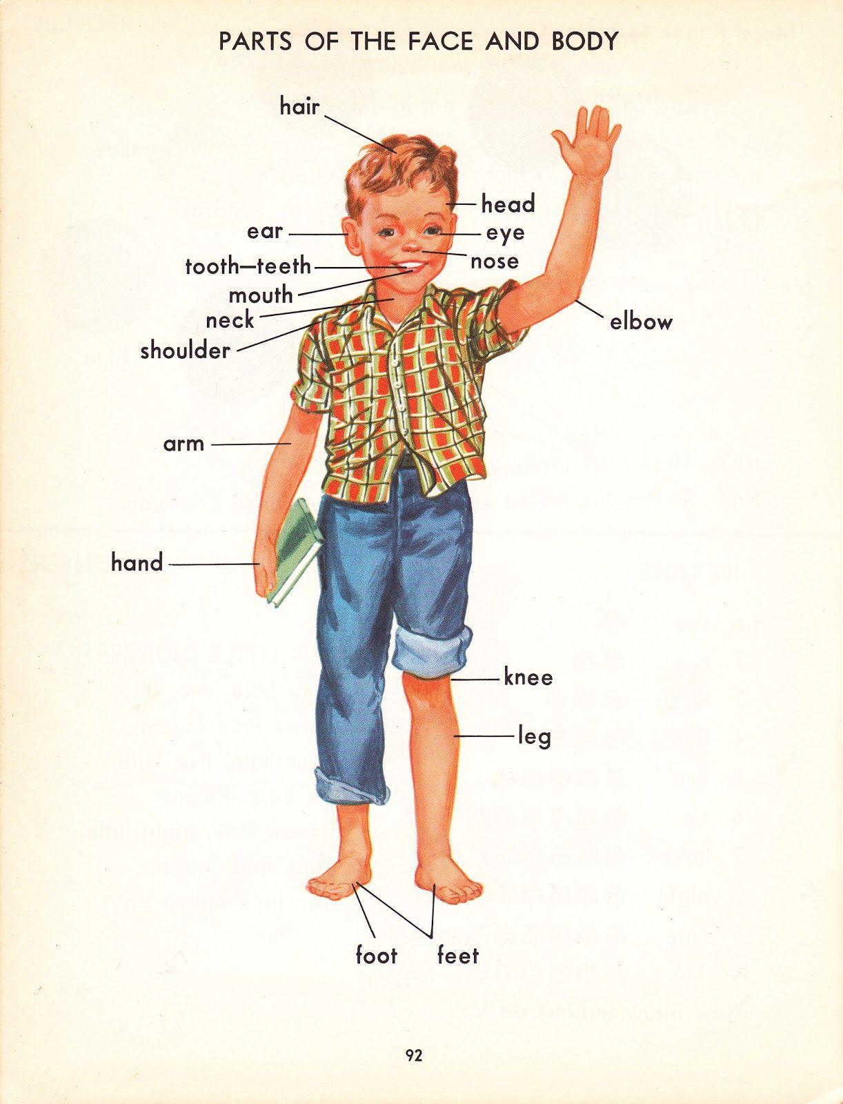 Human Part Body Name Bodyparts Ilir Pinterest Language