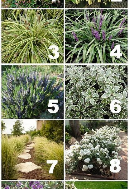 native drought tolerant plants
