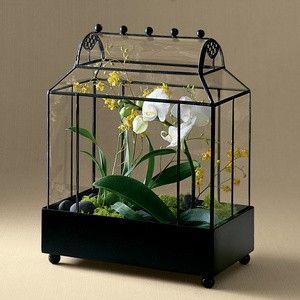 terrario con phalaenopsis de kaboodle.com