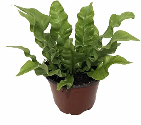 houseplant House plants, Indoor air
