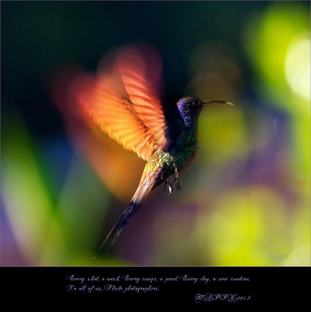 by Rosane Miller