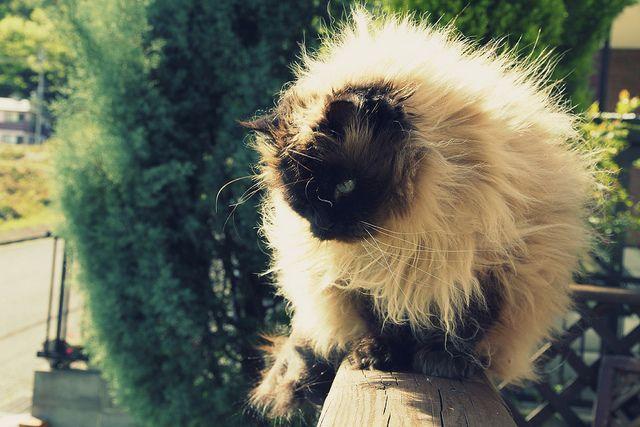 My cat by yuu@photography, via Flickr  #kitty