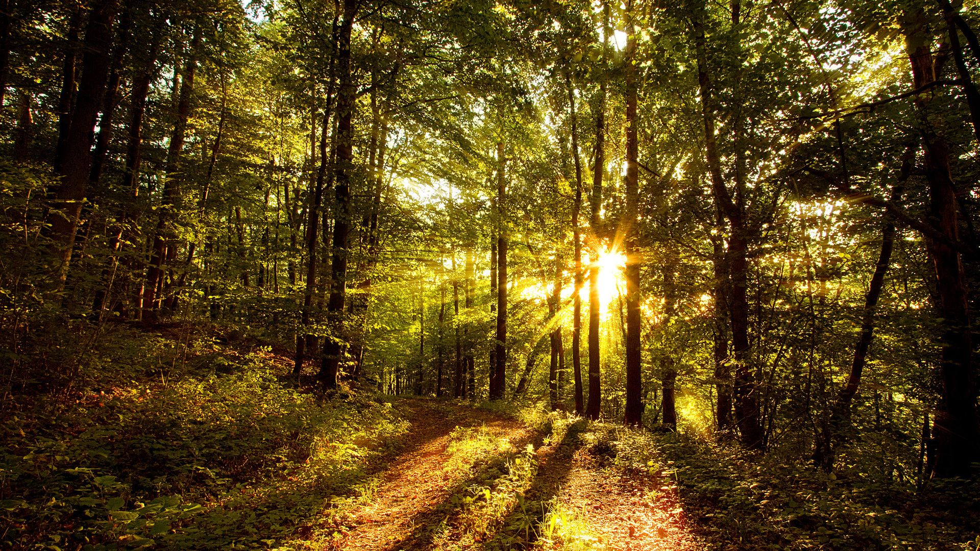 20 Amazingly beautiful Forest Road Pictures