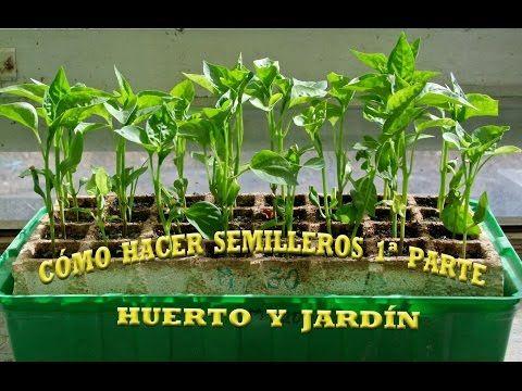 Siembra en almácigo y Trasplante - YouTube | plantas