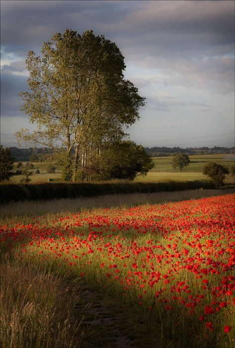Evening Poppies Con Imagenes Fotografia Paisaje Paisajes Fotografia Hdr