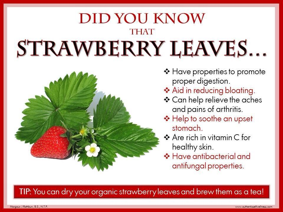 Strawberry Leaves Tea Benefits Strawberry Leaves Strawberry