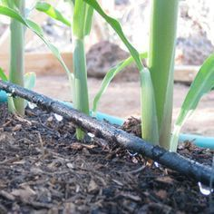 Beginner's Guide to Drip Irrigation. Conserve water and save time with an irriga...#beginners #conserve #drip #guide #irriga #irrigation #save #time #water
