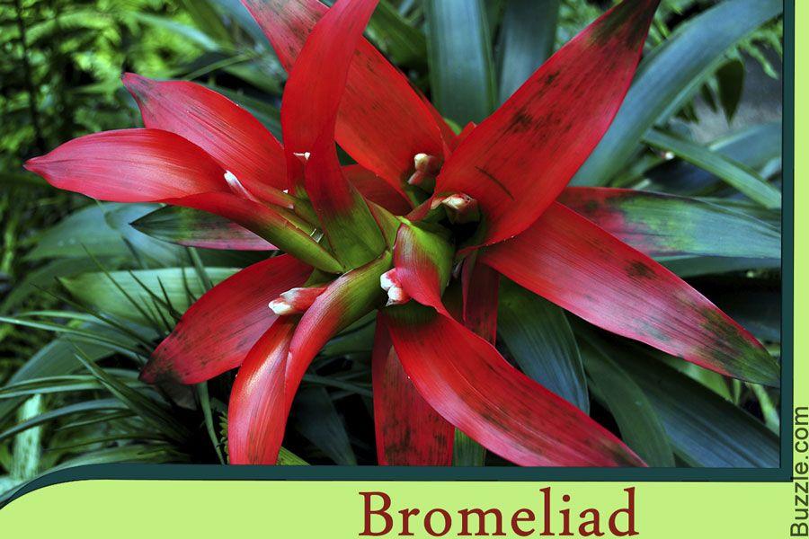 amazon rainforest plants list. these vibrant amazon rainforest plants will take your breath away list