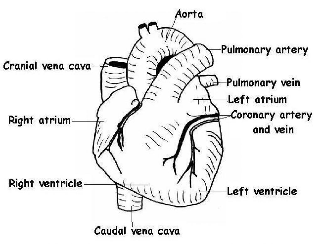 Google Biology Diagram