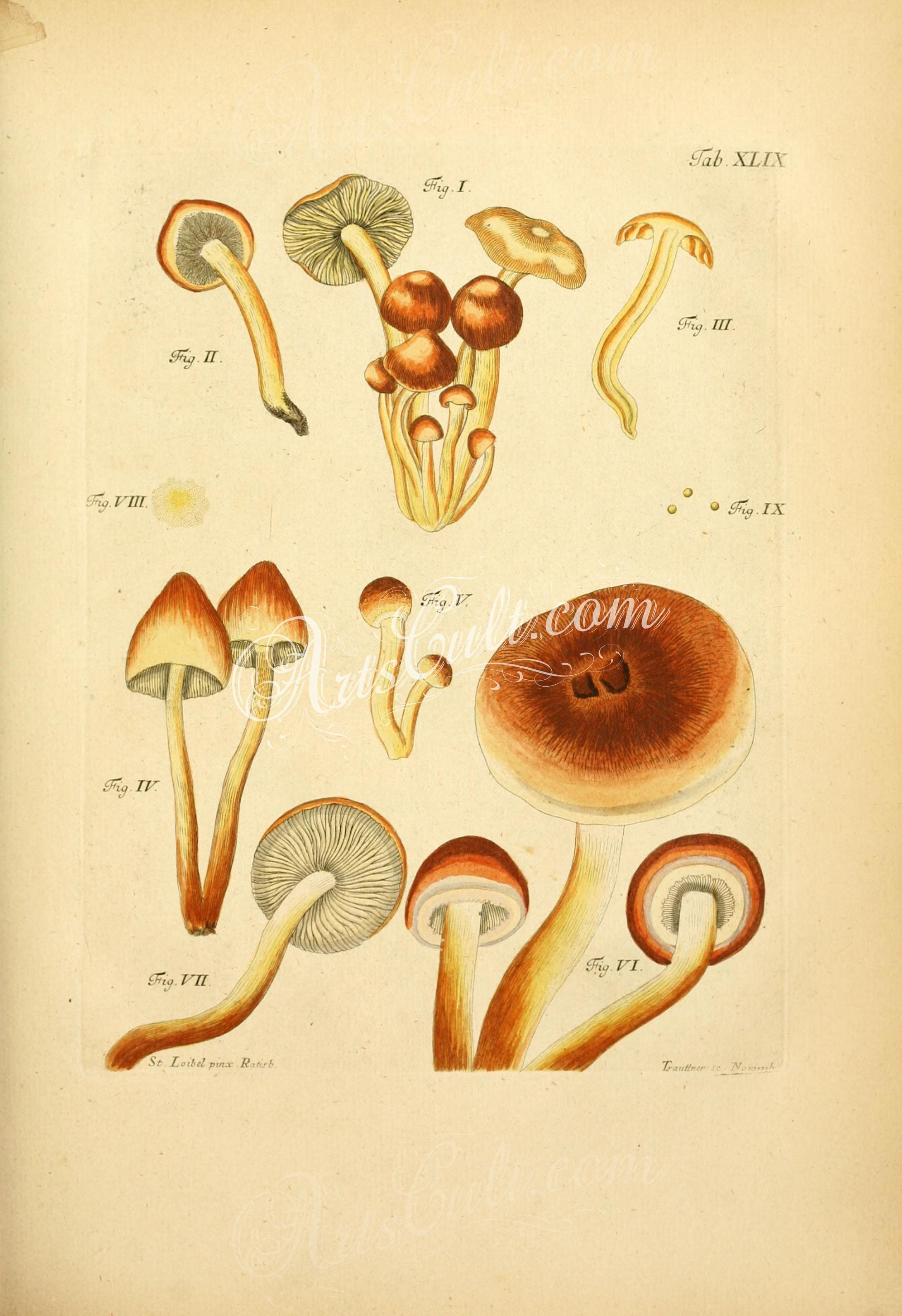 mushrooms-07441 049-unspecified mushrooms ArtsCult.com Artscult ...