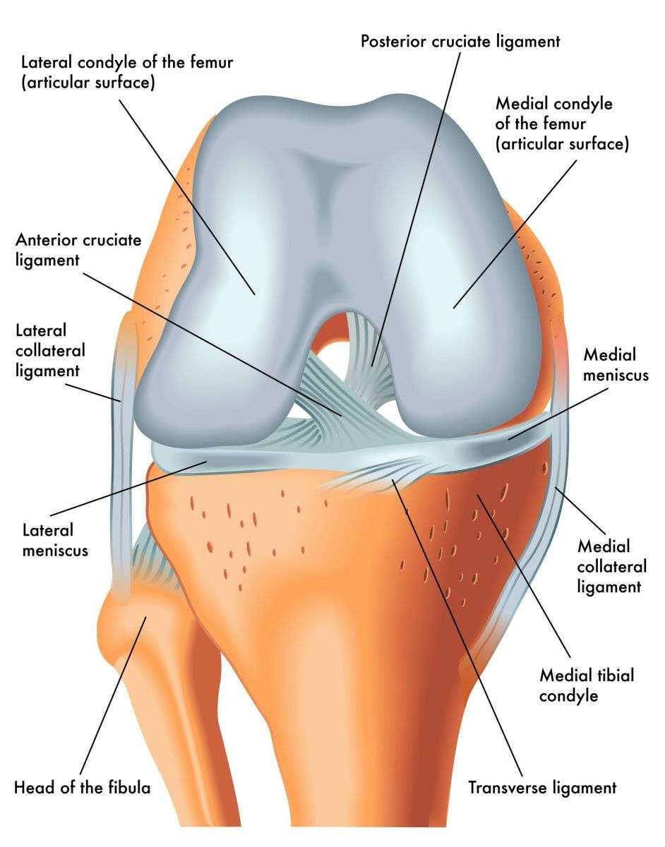 Knee Joint & Ligament Anatomy Singapore.jpg (942×1200) | A&P ...
