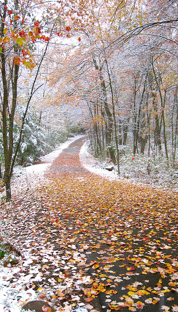 Frosty Fall Leaves Wallpaper When Fall Becomes Winter Time To Head Home For The