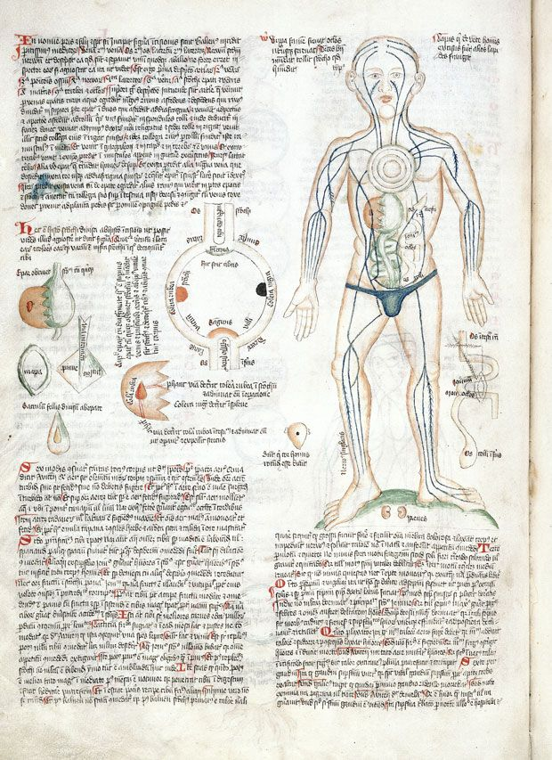The art of medicine mapping the body in 2000 years of images and organ man with arteries the stomach and internal organs artist unknown from ccuart Choice Image