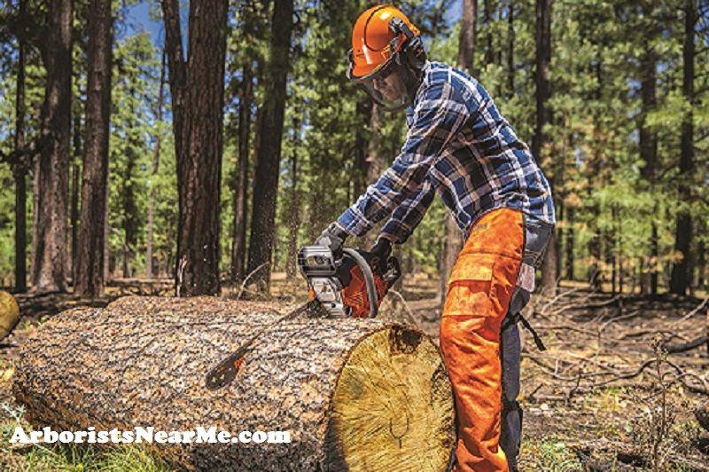 Best Arborist in Minneapolis MN Best chainsaw, Chainsaw