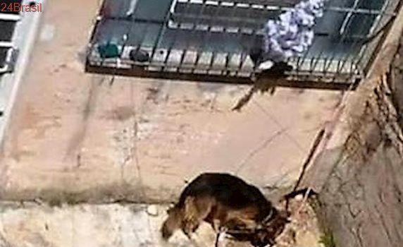 Protetores organizam manifestação após morte de cadela em Botucatu