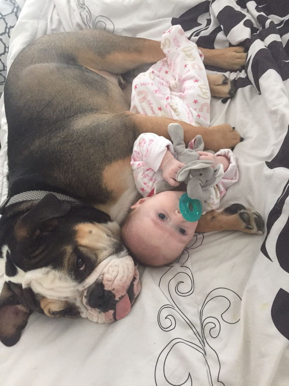 English Bulldog Baby Girl Puppy Dog And Baby Best Friends Animals