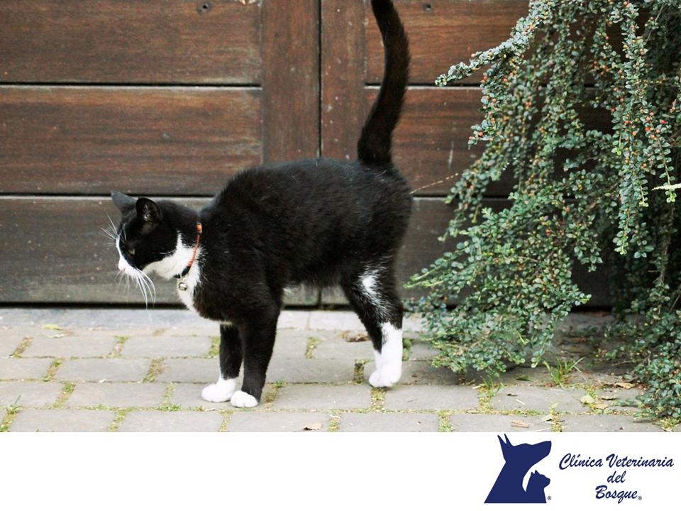 Los Gatos Marcan Su Territorio En Clínica Veterinaria Del Bosque Los Gatos Suelen Marcar Territorio De Muchas For Orina De Gato Gatos Alimentos Para Mascotas