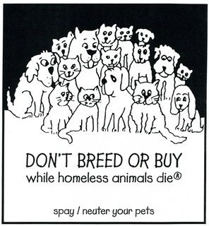 1ee3aa424a003a1679570226486cb62c - How Much Does It Cost To Get Your Pet Spayed