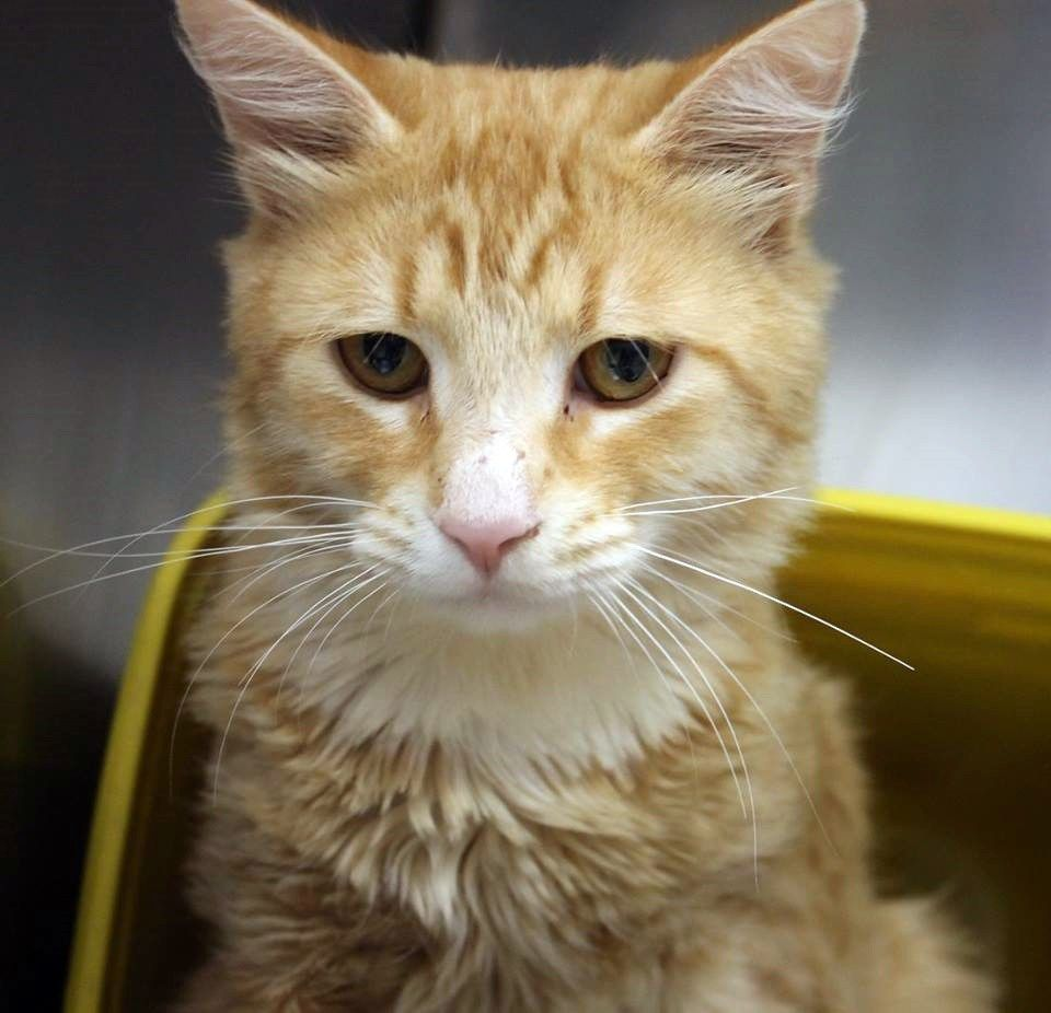 Lonely ginger boy at Upstate kill shelter is running out