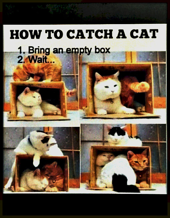 How To Catch A Cat Your Choice Of Print To Frame Yourself Etsy In 2021 Funny Animal Pictures Cat Memes Animal Pictures