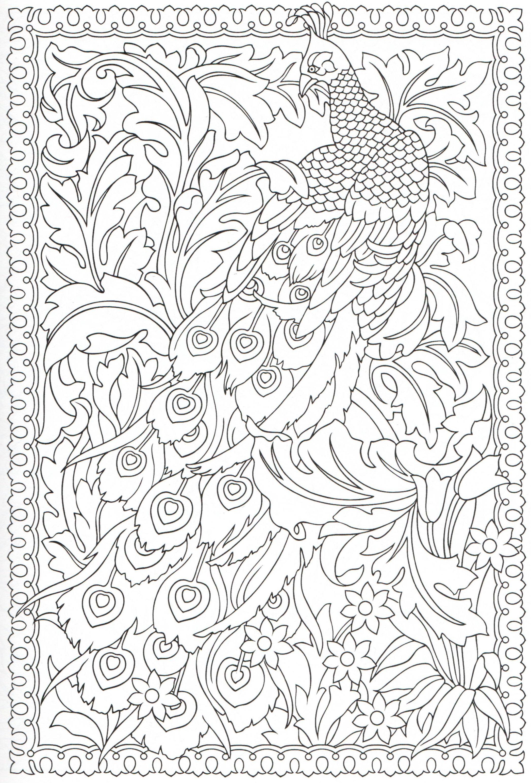 Peacock Coloring Page 14 31 Peacock Coloring Pages