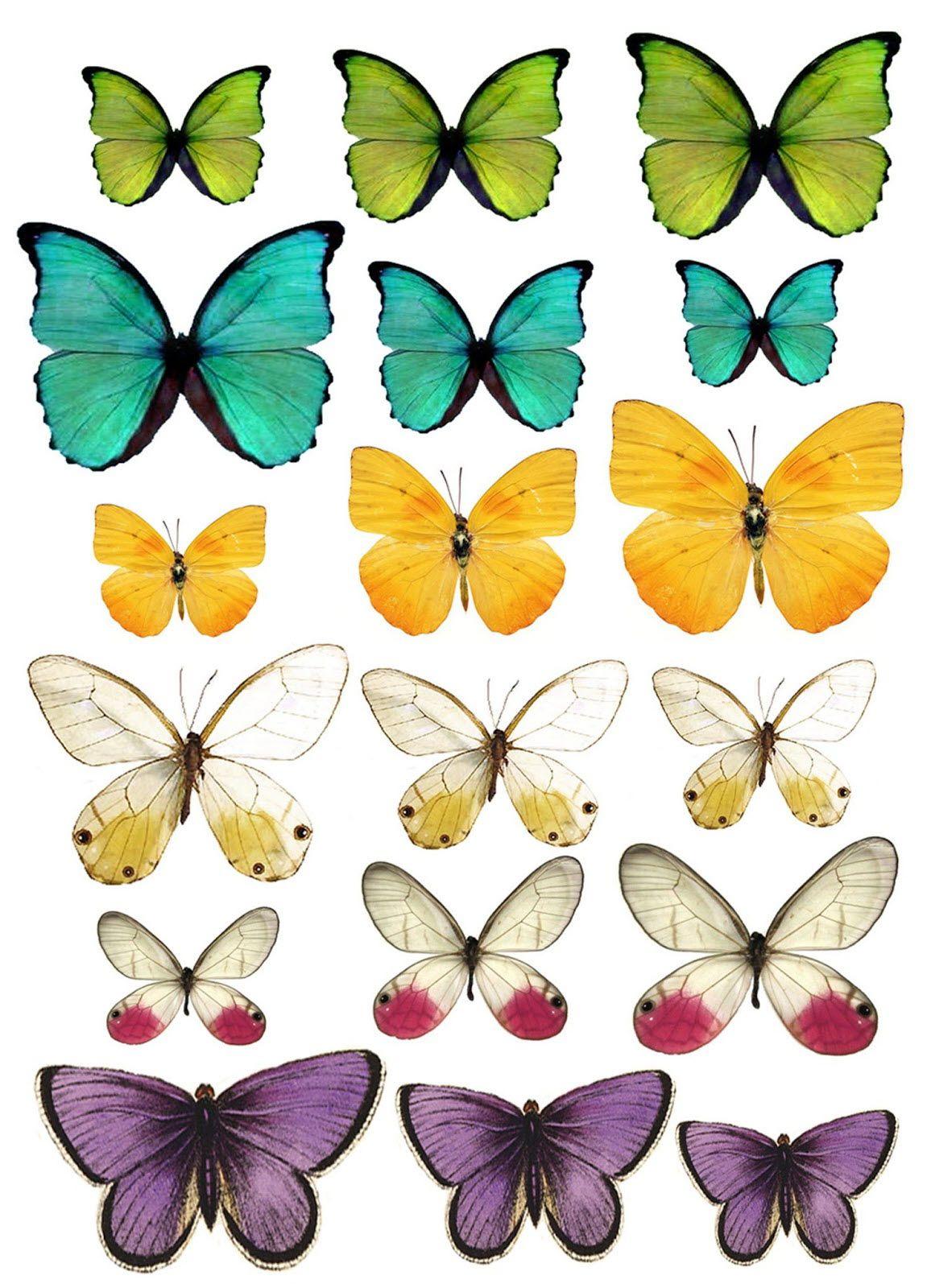 Pdf a telecharger de papillons en papier nuages clouds papillon papillon a imprimer et - Dessin papillon a decouper ...