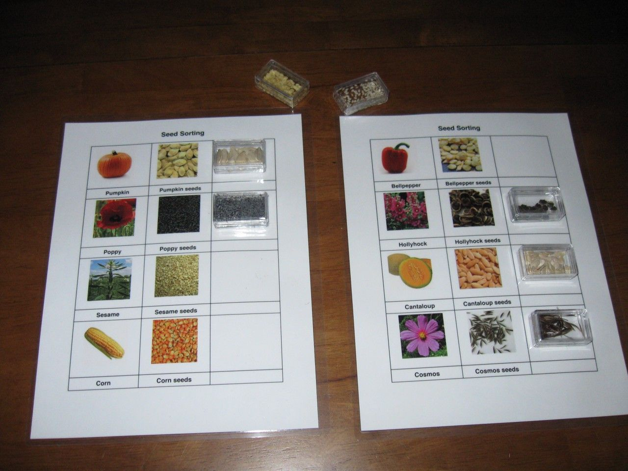 Seed Sorting Owl Unit 6