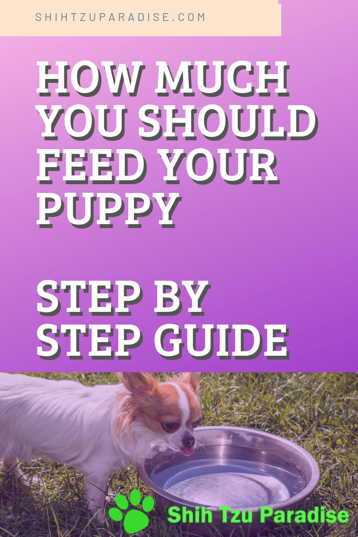 How Much Should You Feed A Puppy, Puppy Feeding Guide