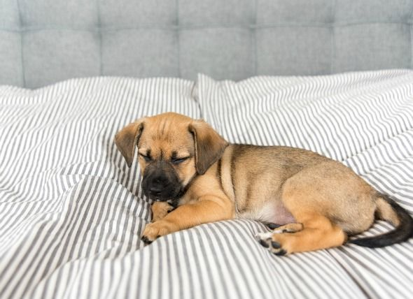 Surviving The First Night With Your Puppy Crate Training Puppy