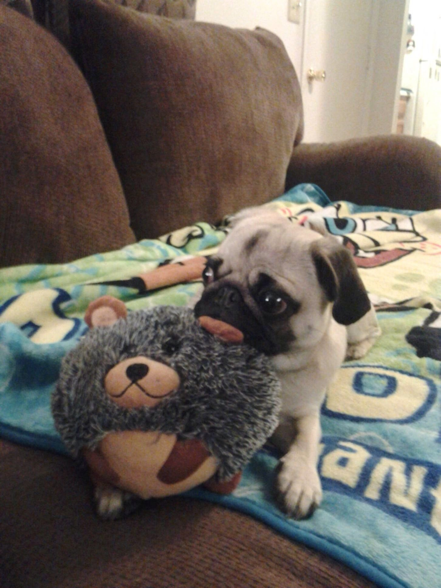 The Real Deep Thought Pug Cute Pugs Pugs Pug Puppies
