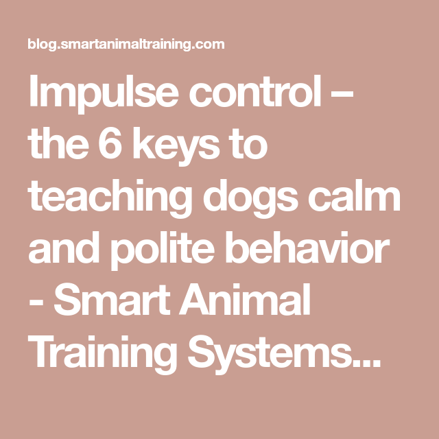 Impulse control – the 6 keys to teaching dogs calm and polite