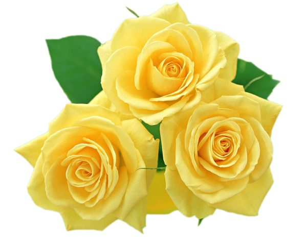 Yellow Roses Png Clipart Yellow Flower Wallpaper Rose Flower Wallpaper Beautiful Flowers Images