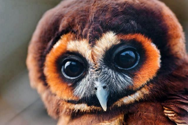 Cute Owl  (from Winds of the Willow)