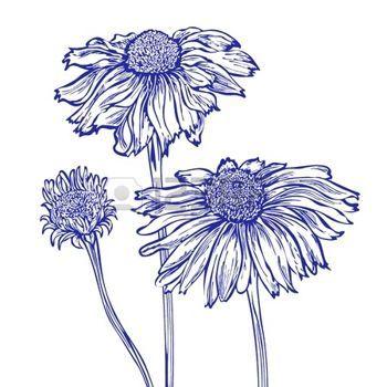 Marguerite Dessin Fleur Marguerite Dessin Dessin Marguerite