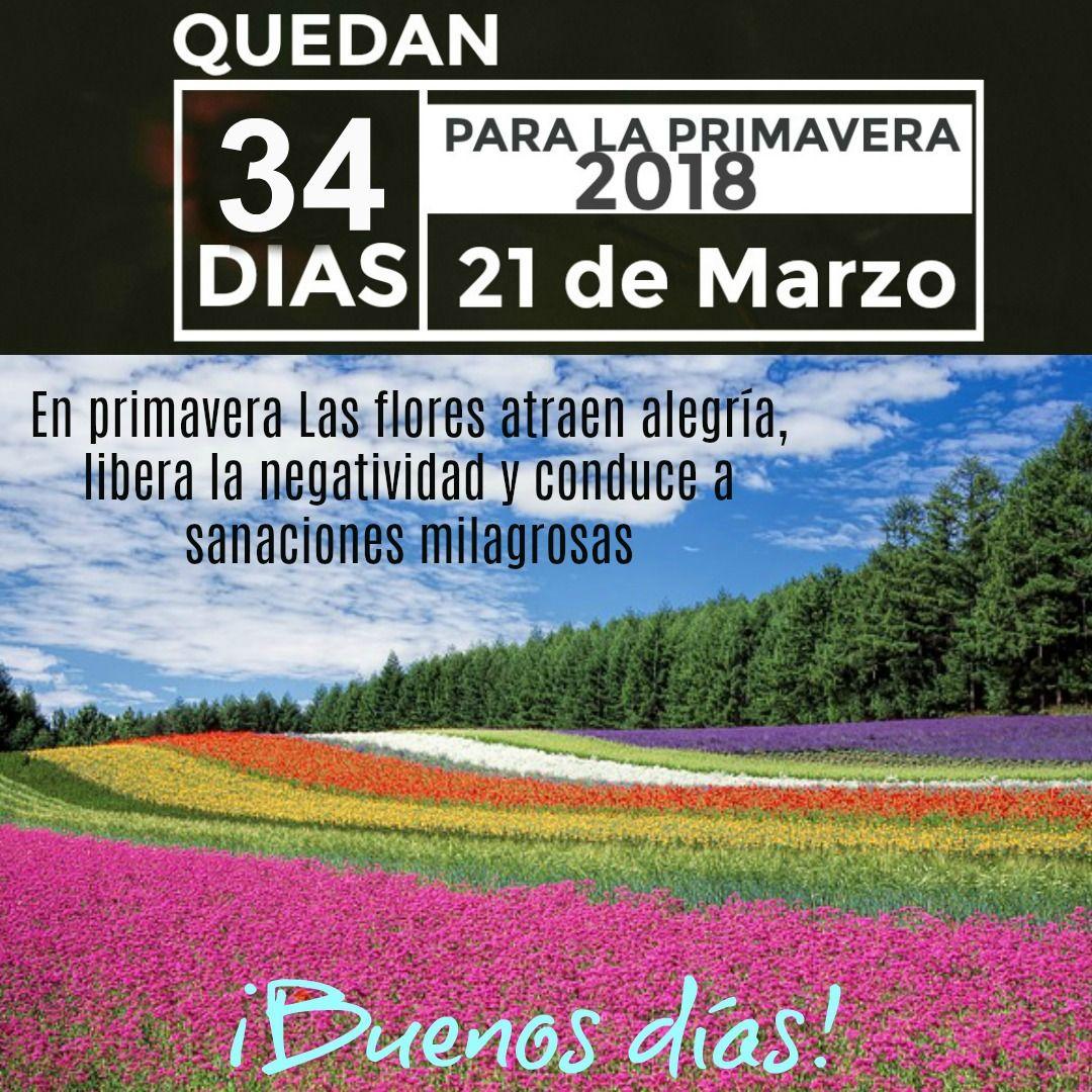 Frases Sobre La Primavera Frases Bonitas Cortas De Flores