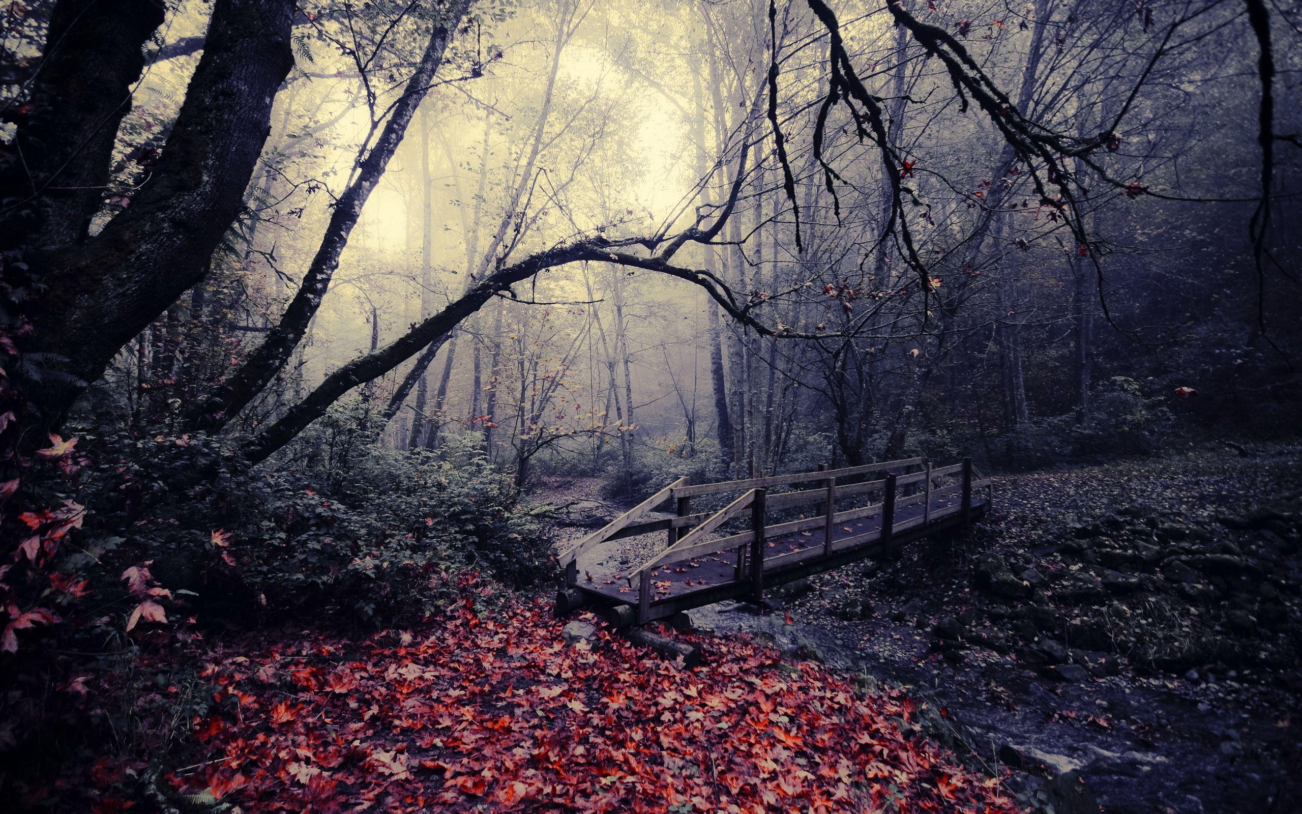 autumn leaves autumn red leaves bridge hd wallpaper autumn rh pinterest se