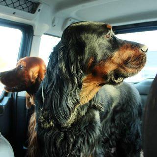 Hundestrand Oppenheim Mitten In Deutschland Welpen Hunde Hunde Futter