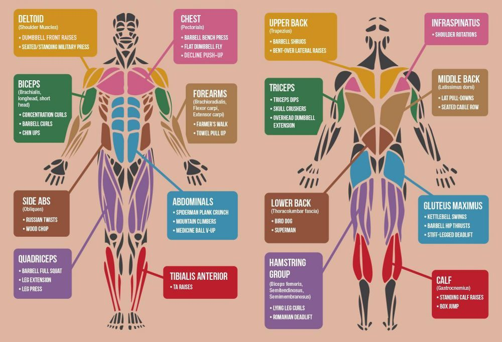 Repsexercises For Muscles Bodymuscles In 2018 Pinterest