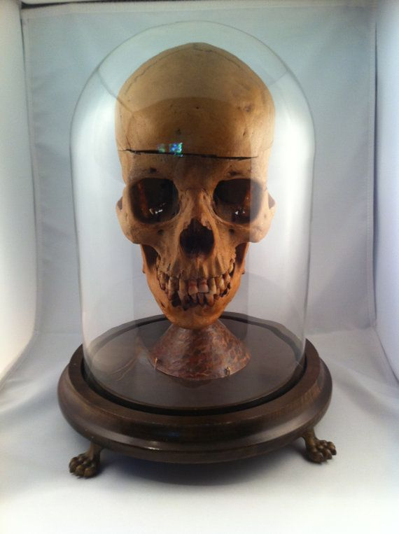 Ahh Skull Under Glass A Necromancer S Delight