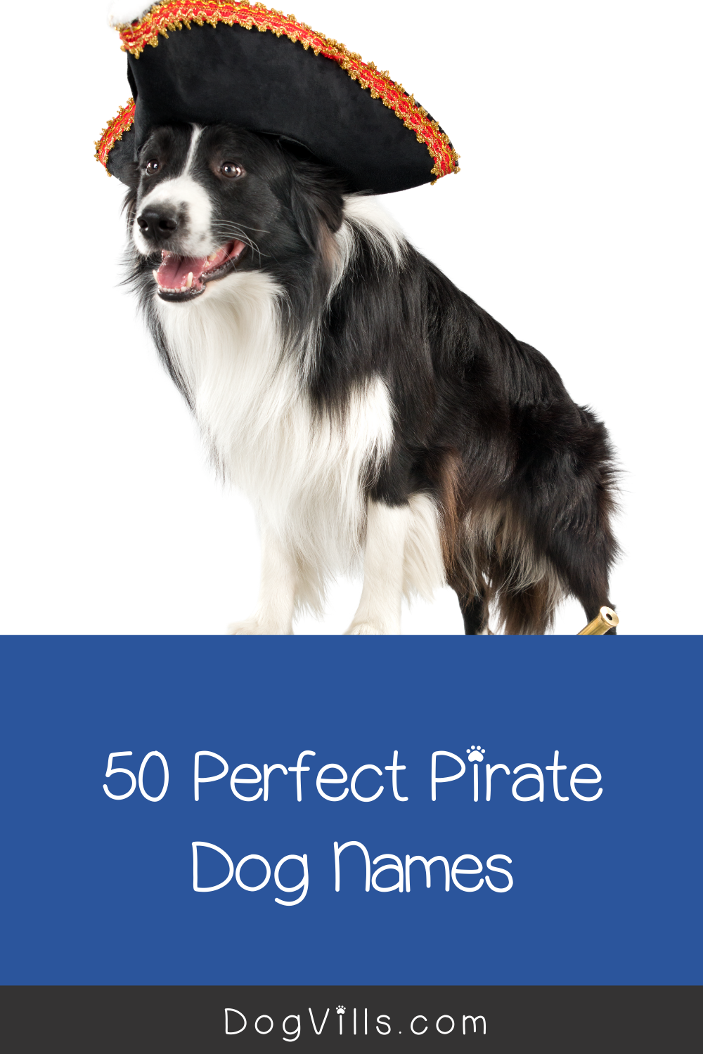 50 Perfect Pirate Dog Names Dogvills In 2020 Dog Names Dog Adoption Quotes Dog Adoption Party