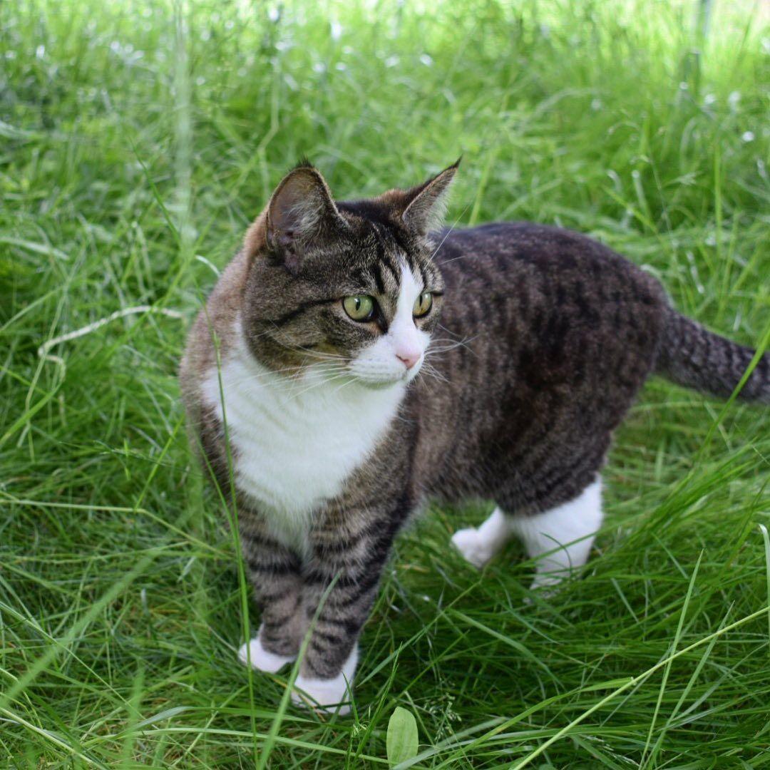 #cats #cat #catsofinstagram #cats_of_instagram #catsagram #catstagram #catlover #pets #instacat #catlovers #meow #kittens #kitten #kitty #love #world #catoftheday #animals #catsuit #pet #cute #catlife #adoptdontshop #gatos #gato #lovecats #cats_of_day #ilovemycat #animal