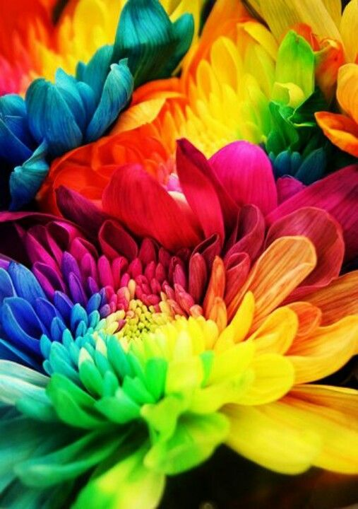 So Much Color With Images Rainbow Flowers Colorful Flowers