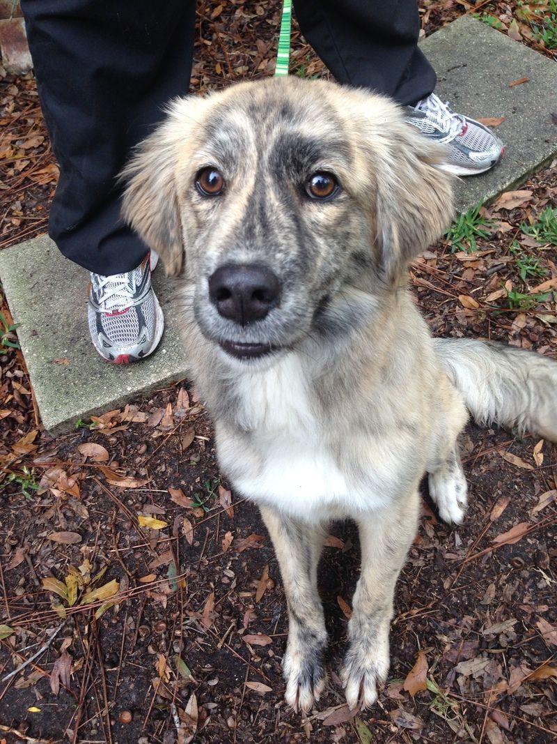 Adopt a Pet | Jacksonville Humane Society