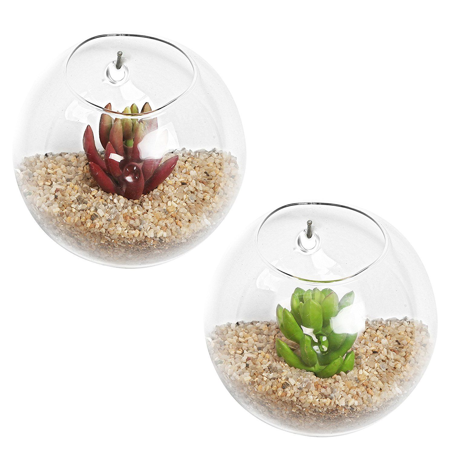 Set of wall mounted clear glass terrariums air plant globes